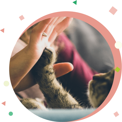 veterinaria-cat-min